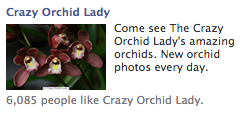 Facebook Ad For Crazy Orchid Lady Forum